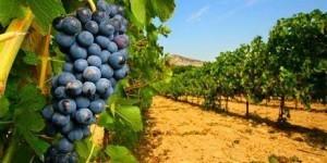 domaine viticole biologique et vin de Provence