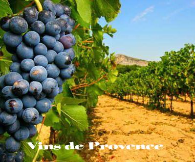vin de provence var