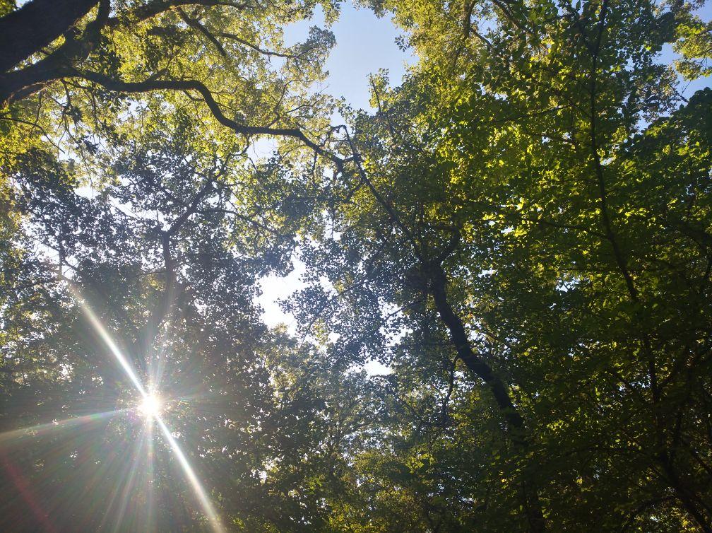 forêt relique de la sainte baume en provence